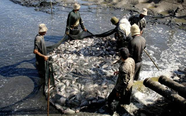 Kuwait produces 2,000 tons of economic fish in June 2020